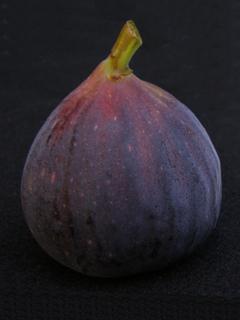 Walker Fig